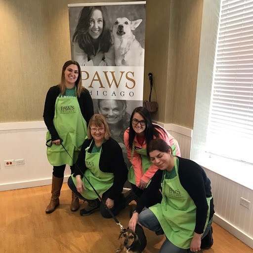 LPC Volunteer Event at PAWS Shelter in Chicago